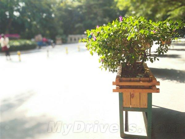 Huawei Honor 6 Plus scatto diurno effetto bokeh