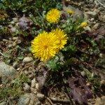 foto tirada com iOcean MT6752 The Rock