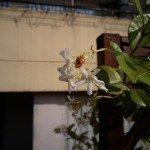 Foto tirada com Elephone P7000