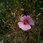 Foto scattata con Mlais M7