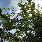Foto scattata con Huawei Mate S