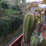 Foto scattata con Huawei Mate 8