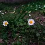 Oukitel-u15s-foto-sample-6