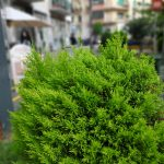 Huawei P20 sample dual camera
