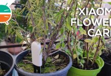 recensione xiaomi flower care
