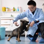 china cloned dog