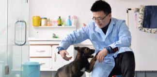 China geklonter Hund