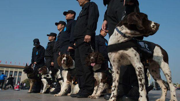 cão china