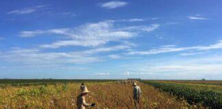 huawei 5g infrastrutture brasile agricoltura