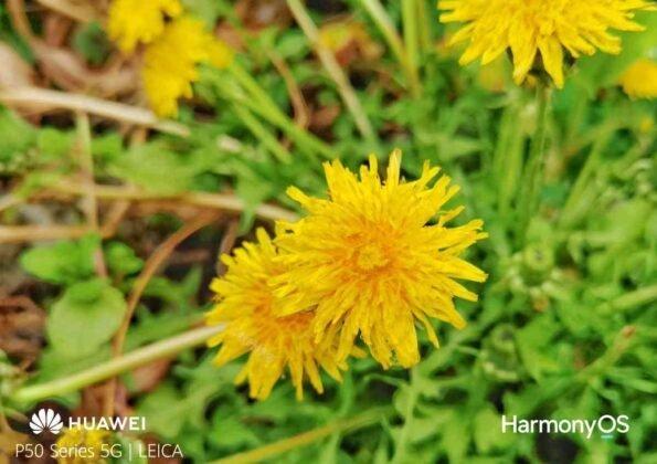 huawei p50 sample fotocamera