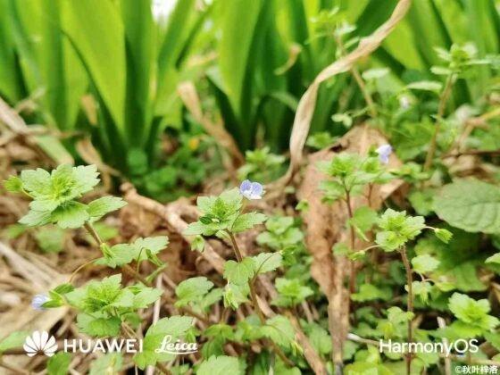 huawei p50 sample fotocamera 3