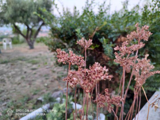 sample foto Red Magic